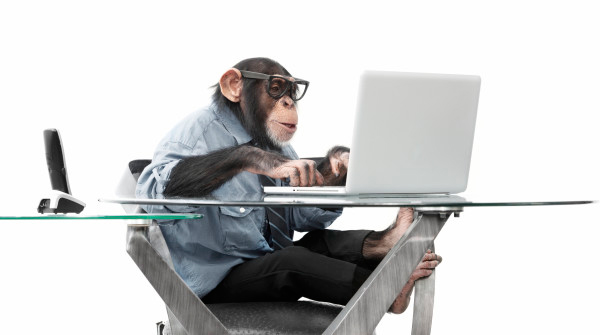 monkey-working-2